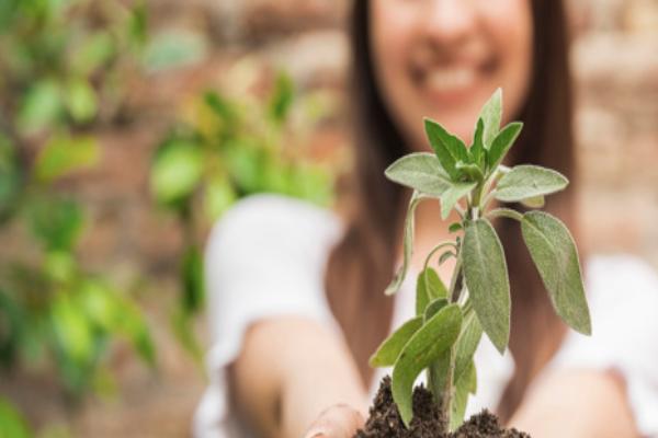 Imagen publicación: Impulso al liderazgo juvenil ambiental